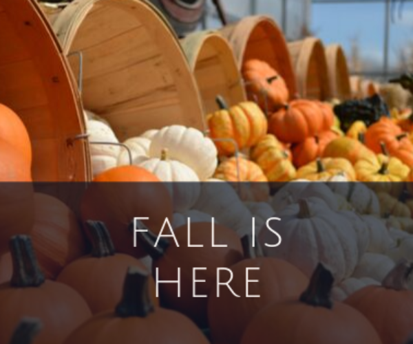 Our Favorite Season Is Here!